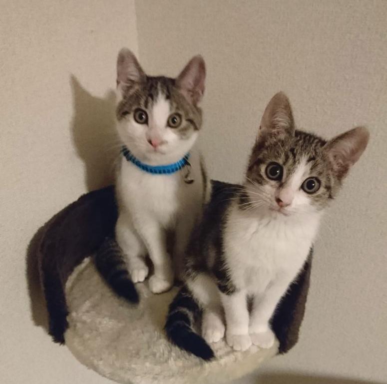 子猫と暮らすとは